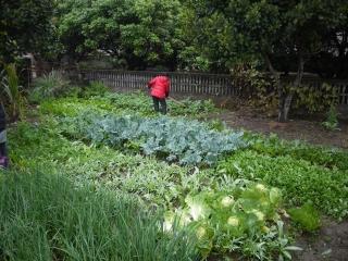 campagne - jardin potager